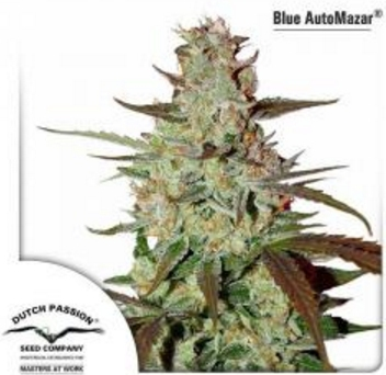 Blue AutoMazar - Dutch Passion 1 wietzaadje