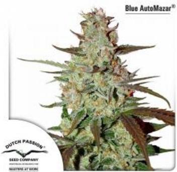 Blue AutoMazar - Dutch Passion 3 wietzaden