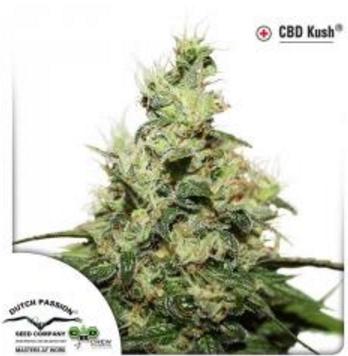 CBD Kush - Dutch Passion 3 wietzaden