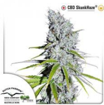 CBD SkunkHaze - Dutch Passion 1 wietzaadje