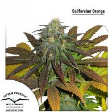 California Orange - Dutch Passion 1 wietzaadje