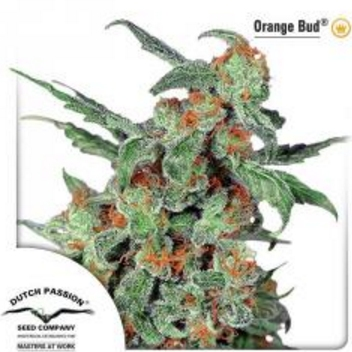 Orange Bud - Dutch Passion 3 wietzaden