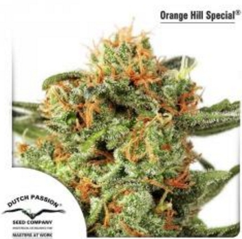 Orange Hill Special - Dutch Passion 1 wietzaadje