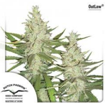 OutLaw - Dutch Passion 5 wietzaden