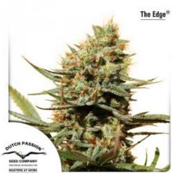The Edge - Dutch Passion 1 wietzaadje